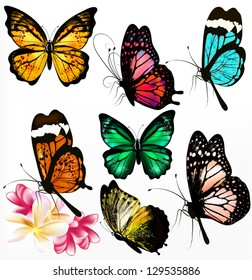Set of realistic colorful vector butterflies for design
