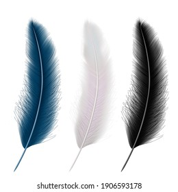 Set of realistic feather set: white black and blue. Vector illustration