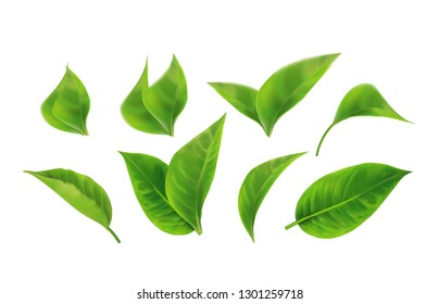 Set of Realistic Green Leaves Collection. Spring.Element for design, advertising, packaging products white background 3d illustration