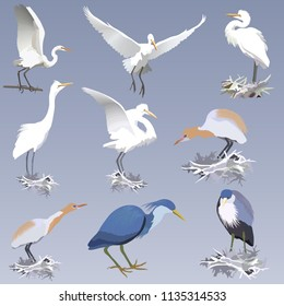 set of realistic herons of different species in different postures -  on the nests, on a branch.  Pied heron, big white heron and cattle egret