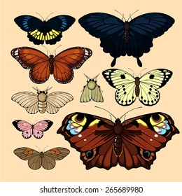 Set of realistic images of beautiful butterflies and moths, isolated on neutral background