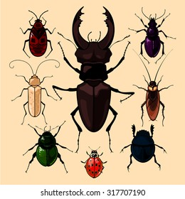 Set of realistic images of bugs, isolated on neutral background