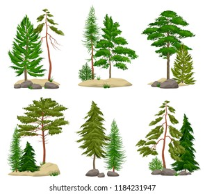 Set of realistic pine forest elements with conifer trees soil and boulders isolated vector illustration