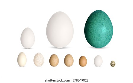Set of realistic poultry eggs. Goose, ostrich, emu, duck, guinea fowl, turkey, chicken, quail egg. For web, print, etc. Vector illustration.