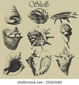 Set with realistic shells. Hand drawn.