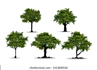 Set of realistic trees in white background. Nutural design in EPS10 vector illustration.