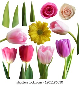 Set of realistic tulips roses and leaves, isolated on white, vector illustration