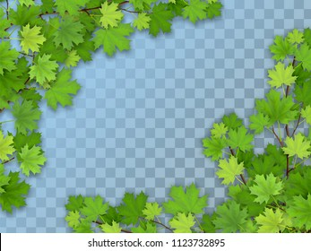 Set of realistic vector maple tree branches with green leaves. Element of natural design. Isolated on a transparent background.