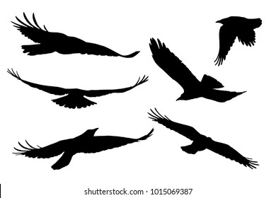 Set of realistic vector silhouettes of flying birds, isolated on white background