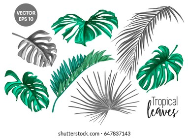 Set of realistic vector tropical leaves. Leaves of palm trees and plants for use in your designs, backgrounds and web pages. Decorative elements.