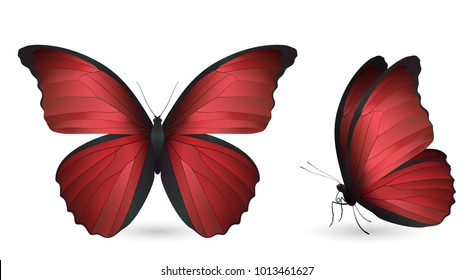 Set of red butterflies isolated on a white background. Realistic 3D illustration