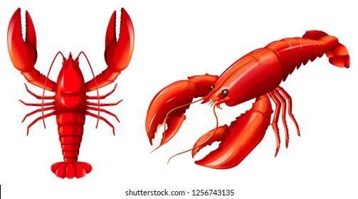 Set of red lobster illustration
