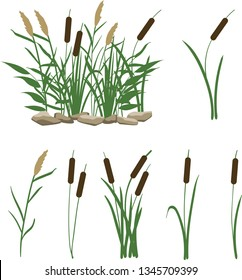 A set of reeds in grass isolated on white background