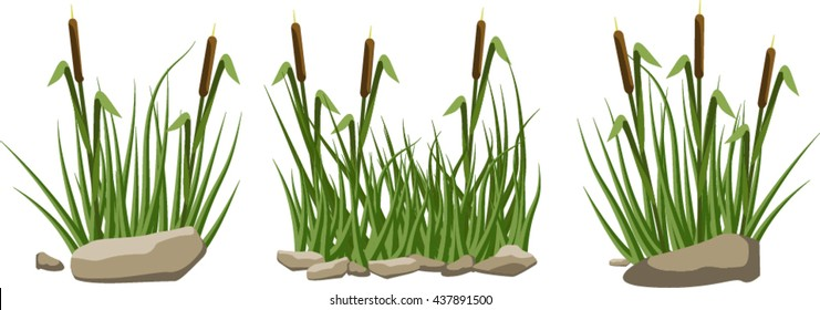 A set of reeds in grass and stones isolated on white background