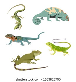 Set of reptile realistic flat vector illustration. Lizard,  chameleon, gecko, monitor, skink, iguana stickers.