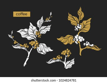Set of retro shape coffee branch with leaf and natural bean. Botanical drawing gold design. Nature tree Eco food Organic drink Herb silhouette illustration isolated on black background Tropic engraved