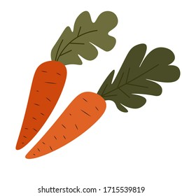Set of ripe carrots with leaves, isolated vegetable with foliage. Organic and ecological veggies for vegetarian and vegan menu and nutrition. Healthy products grown at farm, vector in flat style
