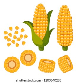 Set of ripe corn, halves and grains in different angles on a white.