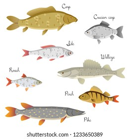Set of river fishes with name subscription . Carp, crucian carp, roach, perch, ide, walleye, pike. Vector illustration