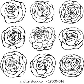 Set of rose vector on white background