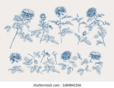 Set with roses. Botanical vector illustration. Blue and white. Classical.