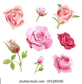 Set of roses, pink, red flowers and buds, green leaves on white background, digital draw illustration, collection for design, vector