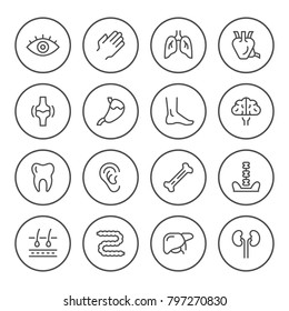 Set round line icons of human organs