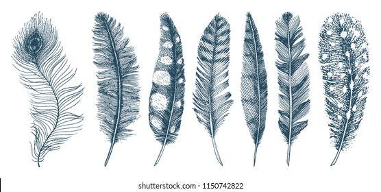 Set of Rustic realistic feathers of different birds, owls, peacocks, ducks. engraved hand drawn in old vintage sketch. Vector illustration.