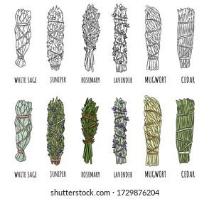 Set of sage and herbs sage smudge sticks bundles. Vector stock hand-drawn set of isolated doodles on white background. Collection of bundles. Sage, rosemary, lavender, cedar, juniper, mugwort