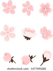Set of Sakura flowers, cherry blossom isolated on white background