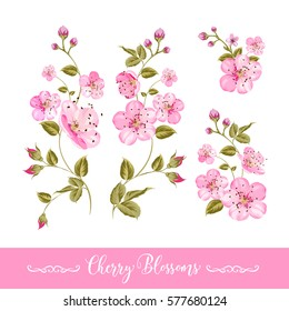 Set of sakura flowers elements. Collection of spring flowers on a white background. Vector illustration bundle.
