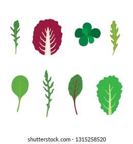 Set of salad greens vector. Mix of salad leaves. Arugula, chard, spinach, corn