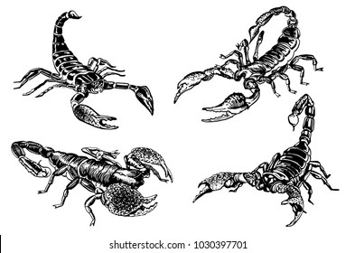Set of scorpions isolated on white,vector sketch for tattoo and printing