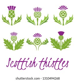 Set of Scottish thistles. Vector illustration.