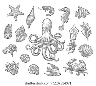 Set sea animals. Shell, cuttlefish, coral, oyster, crab, shrimp, seaweed, star, fish and octopus. Vector black engraving vintage illustrations. Isolated on white background.
