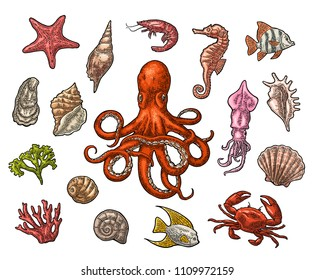 Set sea animals. Shell, cuttlefish, coral, oyster, crab, shrimp, seaweed, star, fish and octopus. Vector color engraving vintage illustrations. Isolated on white background.