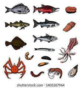 Set of sea animals. Vector cartoon illustrations. Isolated objects on a white background. Seafood. Hand-drawn style.