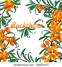 Set of Sea Buckthorn. Frame Branch of sea-buckthorn with leaves.