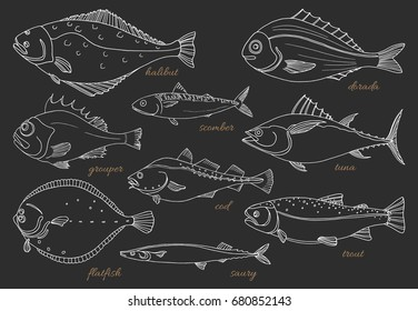 Set of sea fish on black background. Perch, cod, mackerel, flounder, saira, tuna, dorado, halibut, trout. Vector doodle. Seafood, sketch. Illustration isolated and grouped for easy editing.
