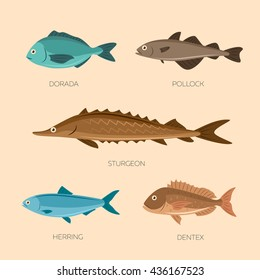 Set of sea fish: sea trout, capelin, burbot, haddock, milkfish, hake. Fish vector set in flat style design. Ocean, sea fish icons collection isolated. Cute cartoon flat sea fishes.