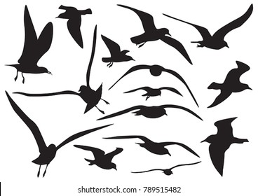 set of sea gull Silhouette, isolated
