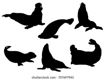 Set of Seals and Sea Calf Silhouettes - Vector Illustration