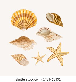 Set of seashells. Golden shells and starfishes on a light background. Vector illustration