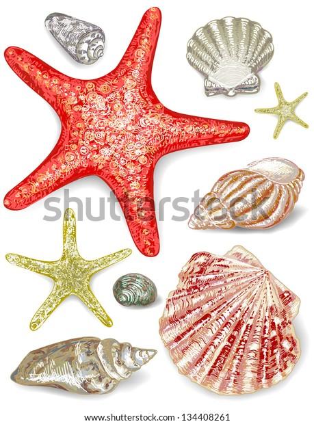 Set of seashells. Vector illustration