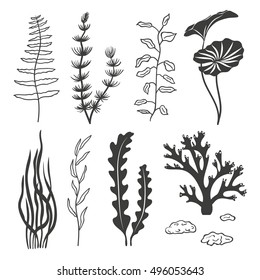 Set of seaweeds, corals and stones isolated on white background. Underwater silhouettes algae set. Aquarium plants collection. Vector marine life.