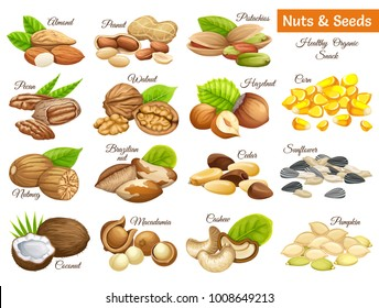 Set seeds sunflower, pumpkin, and corn. Nuts cashew, brazilian nut, coconut, cedar, hazelnut, cashew, almonds, walnut, nutmeg, pecan, peanut, macadamia, pistachio.