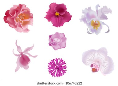 set of seven pink flowers isolated on white