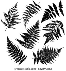 Set of seven silhouettes of ferns. Vector.