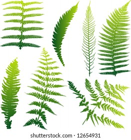 Set of seven vector ferns from New Zealand. Colors can be easily changed.