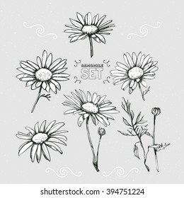 Set from several different chamomiles. Daisies hand-drawn.
